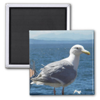 Magnet: Glaucous-winged Seagull 2 Inch Square Magnet