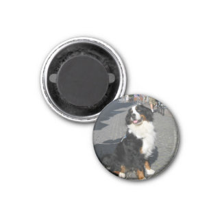 Magnet: Happy Berner on Fussen Street 1 Inch Round Magnet