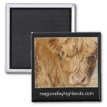 Magnet - Highland Cattle