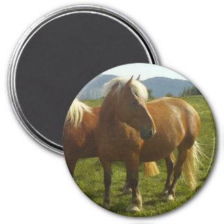 Magnet Horse