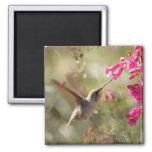 Magnet_Hummingbird Imán De Nevera