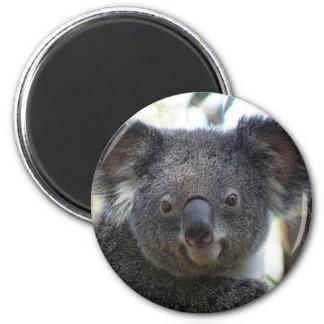 Magnet Koala Australia Photo ZIZZAGO Magnet