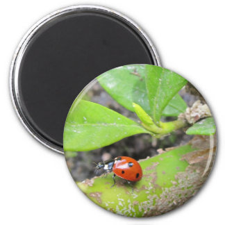 Magnet--Ladybug