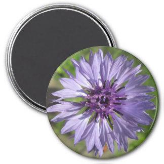 Magnet - Lilac/Purple Bachelor's Button