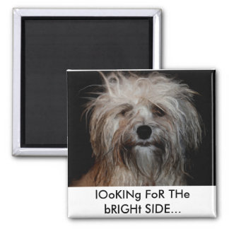 Magnet Looking for the Bright Side - Shorkie Mess