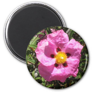 Magnet - Mexican Rock Rose