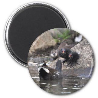 Magnet: Moorhens 2 Inch Round Magnet