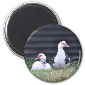 Magnet: Muscovy Ducks 2 Inch Round Magnet
