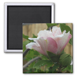 Magnet of a Rose of Sharon Bloom