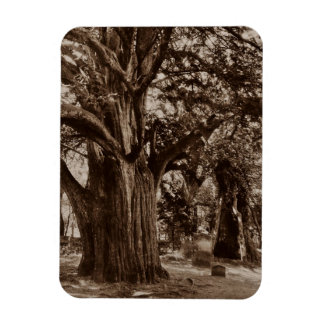 Magnet Old Yew Tree in Church Cemetery in Sepia