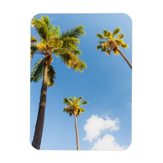Magnet Palm trees #2