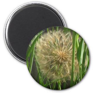 Magnet - Puff ball