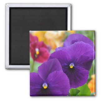 Magnet: Purple Pansies 2 Inch Square Magnet