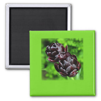 Magnet: Purple Tulips1 2 Inch Square Magnet