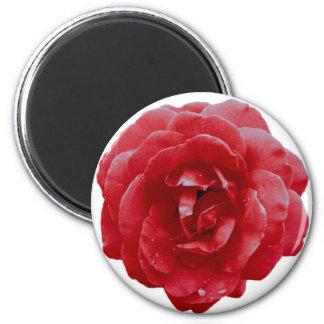 Magnet - Red Red Rose