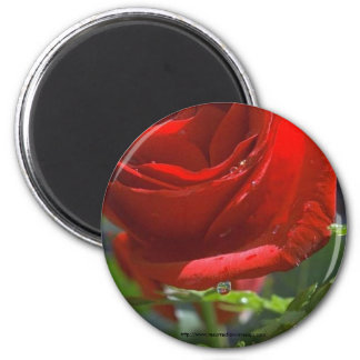 Magnet-Red Rose with water star 2 Inch Round Magnet