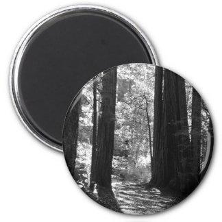 Magnet - Redwoods