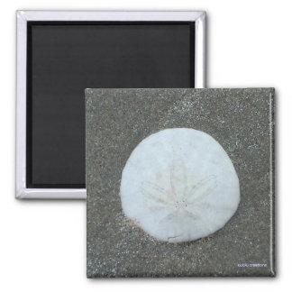 magnet - sand dollar
