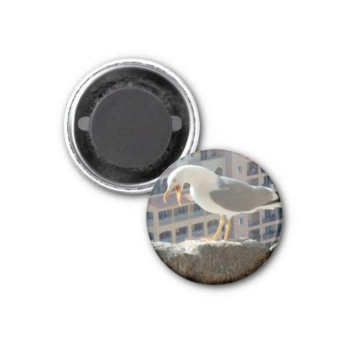Magnet sea gull