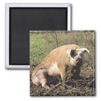 Magnet -  Sheila my Big Fat Pig