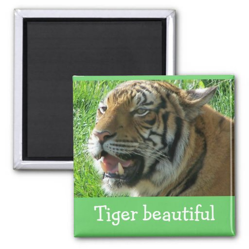 Magnet  Tiger beautiful