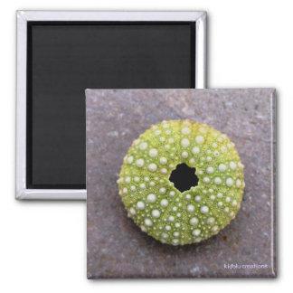 magnet - urchin