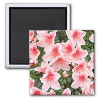 Magnet with Azalea Flower Blossoms