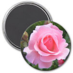 Magnet with beautiful pink rose