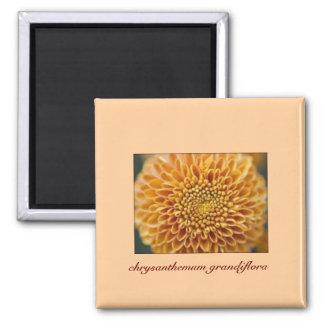 Magnet with Chrysanthemum-Grandiflora Design