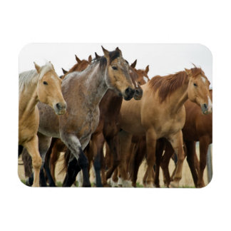 Magnet with horse image