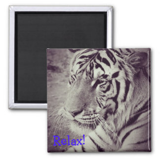magnet with image of a black and white tiger.
