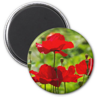 Magnet with talk Corn Poppy