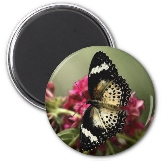 Magnet Yellow and black butterfly