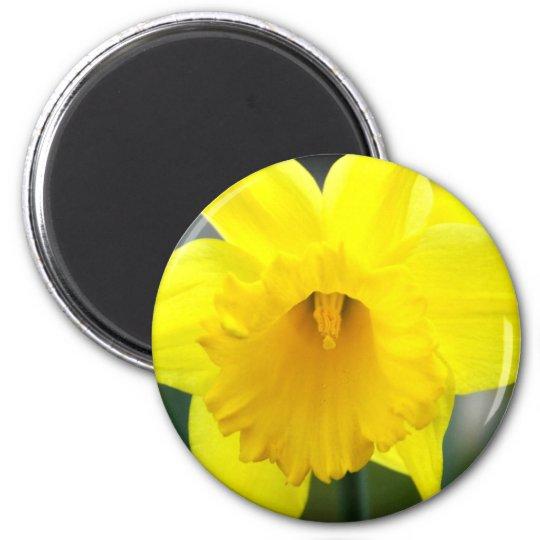 Magnet - Yellow Daffodil