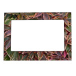 Magnetic Picture Frame With Colorful Coleus Leaves at Zazzle