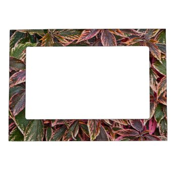 Magnetic Picture Frame With Colorful Coleus Leaves by whatawonderfulworld at Zazzle