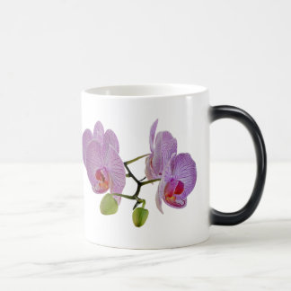 Magnificent 11 oz Morphing Mug