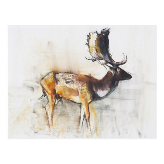 Magnificent Fallow Buck 2006 Postcard