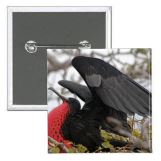 Magnificent Frigate Bird 2 Inch Square Button