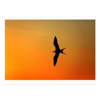 Magnificent frigate bird flying orange sunset postcard