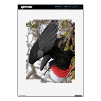 Magnificent Frigate Bird Skins For iPad 3