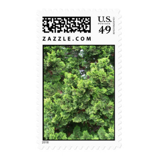 Magnificent Greenery Postage