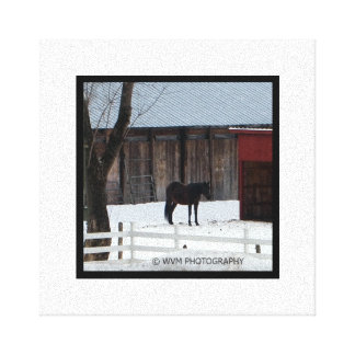Magnificent Horse in His Pasture. Canvas Print
