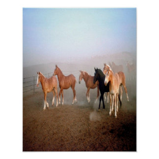 Magnificent horses poster. poster