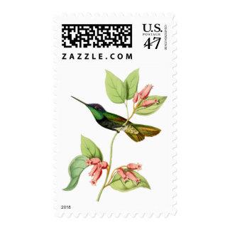 Magnificent Hummingbird Postage Stamp