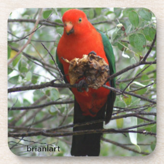 Magnificent King parrot, Drink Coaster