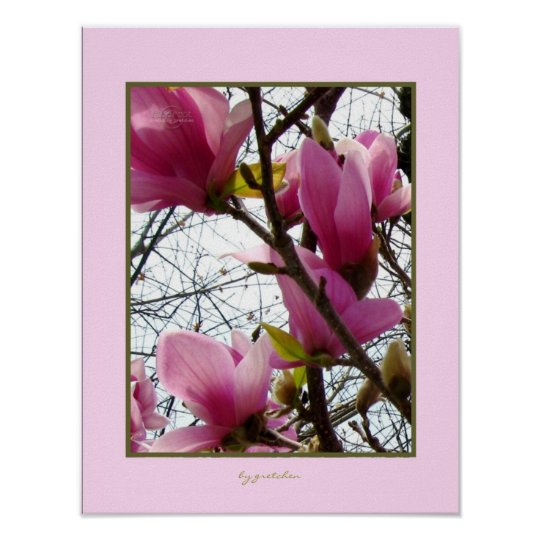 Magnificent Magnolia Tree Flowers 2 Poster