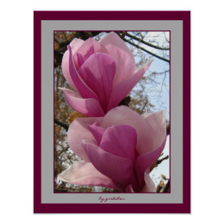 Magnificent Magnolia Tree Flowers Poster