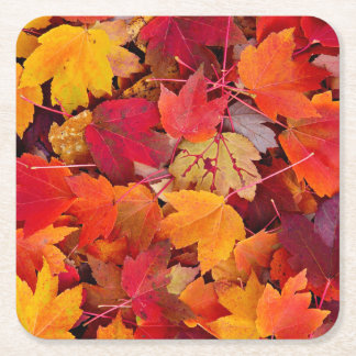 Magnificent Maple Leaves Square Paper Coaster