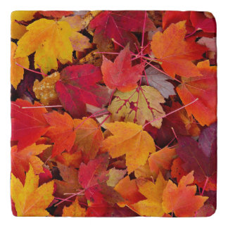 Magnificent Maple Leaves Trivet